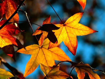autumn_leaves_picture